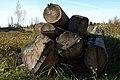 Firewood in Russia. img 20.jpg