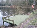 Fishing platform at Kingsley Pond - geograph.org.uk - 1709828.jpg