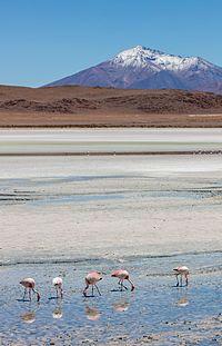 Flamencos andinos (Phoenicoparrus andinus), Laguna Hedionda, Bolivia, 2016-02-03, DD 61.JPG