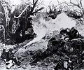 Flamethrower in Tarawa jungle.jpg