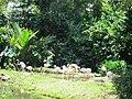 Flamingo 火烈鸟 - panoramio.jpg