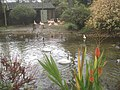 Flamingo pond at Birdland - geograph.org.uk - 1135558.jpg
