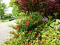 Fleurs de chanteloup - panoramio.jpg