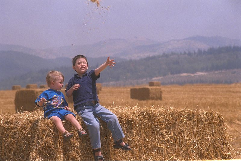 File:Flickr - Government Press Office (GPO) - Children in a Wheat Field.jpg