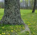 Flickr - Nicholas T - Lichenous.jpg
