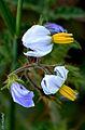 Floral 19.jpg