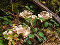 Floral fungus (10493582485).jpg