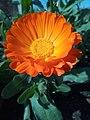 Flower(asarfi).jpg