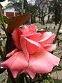 Flower 7 HDR.jpg