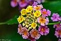 Flower Sabine Woods TX 2018-04-28 09-49-31 (27329255577).jpg