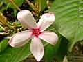 Flower of spring.jpg