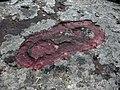 Flyhov (Raä-nr Husaby 70-1) fotsula 6101.jpg