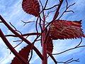 Foliage (3087572943).jpg