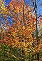 Foliage Walk (14) (30234138582).jpg