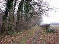 Following the woodland edge - geograph.org.uk - 1099851.jpg