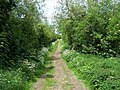 Footpath To Wychnor - geograph.org.uk - 445993.jpg