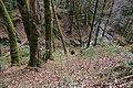 Forêt @ Alex (51098096113).jpg