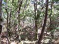 Forêt de la Coubre 007.jpg