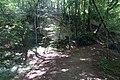 Forest @ Roc de Chère @ Talloires (34836772303).jpg