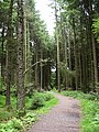 Forest Path, Turton and Entwistle Reservoir - geograph.org.uk - 483232.jpg