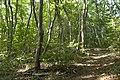 Forest in Mt.Ashio 02.jpg