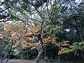 Forest of Sumiyoshi Shrine 5.jpg