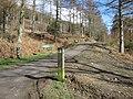 Forest track in Coed Moel Famau - geograph.org.uk - 1193356.jpg