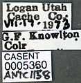 Formica altipetens casent0005360 label 1.jpg
