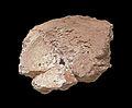 Fragment d'une vertèbre de mammouth-Chartreuse de Molsheim.jpg