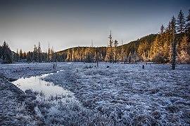 Frosty Muskeg meadow 2377.jpg