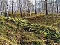 G. Miass, Chelyabinskaya oblast', Russia - panoramio (88).jpg