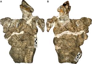 Galesaurus - Specimen in a block