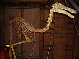 Model van Gallimimus bullatus