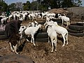 Gambia01SouthGambia058 (5380048499).jpg