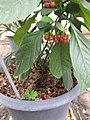 Gardenology.org-IMG 7647 qsbg11mar.jpg