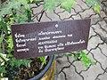 Gardenology.org-IMG 7888 qsbg11mar.jpg
