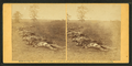 Gathered together for burial, after the Battle of Antietam, by Gardner, Alexander, 1821-1882.png