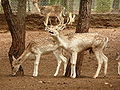 Gaziantep Zoo 1260137.jpg
