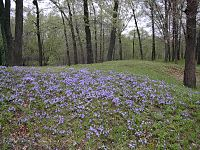 Gees slough effigy mounds.JPG