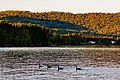 Geese in Grand Portage Bay, Minnesota (37761783892).jpg