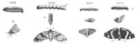 Quatre planches extraites de Metamorphosos de Jan Goedart