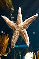 Georgia Aquarium (4662883589).jpg