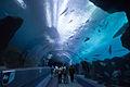 Georgia Aquarium (4663504638).jpg