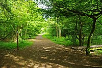 Gernon Bushes Bridleway - geograph.org.uk - 1317523.jpg