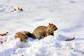 Gfp-squirrel.jpg