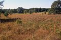 Gfp-wisconsin-mill-bluff-state-park-fields-at-mill-bluff.jpg