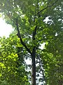 Giardino botanico di Brera (Milan 01.jpg