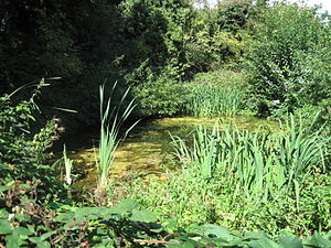 Glebelands Local Nature Reserve - Pond at Glebelands