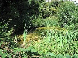 Glebelands Local Nature Reserve - Pond at Glebelands