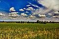 Gmina Narew, Poland - panoramio (106).jpg